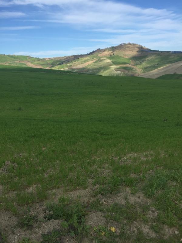 Vendita Terreno Agricolo Furci