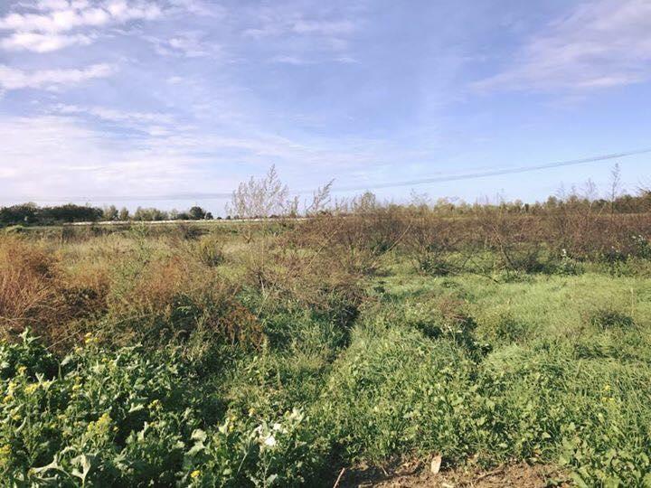 Vendita Terreno Agricolo Casal di Principe