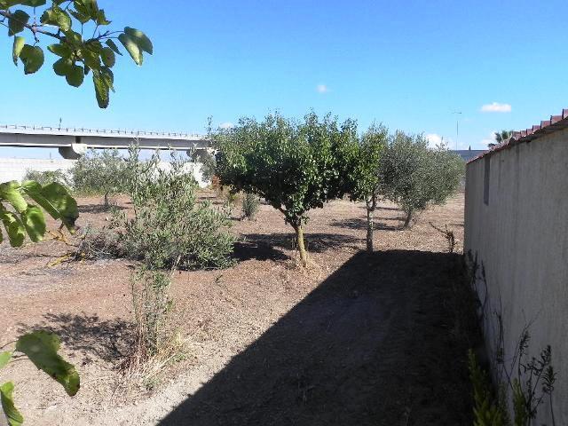 Mazara del Vallo