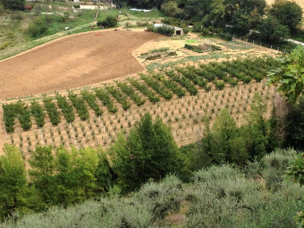 Vendita Terreno Agricolo Montelabbate
