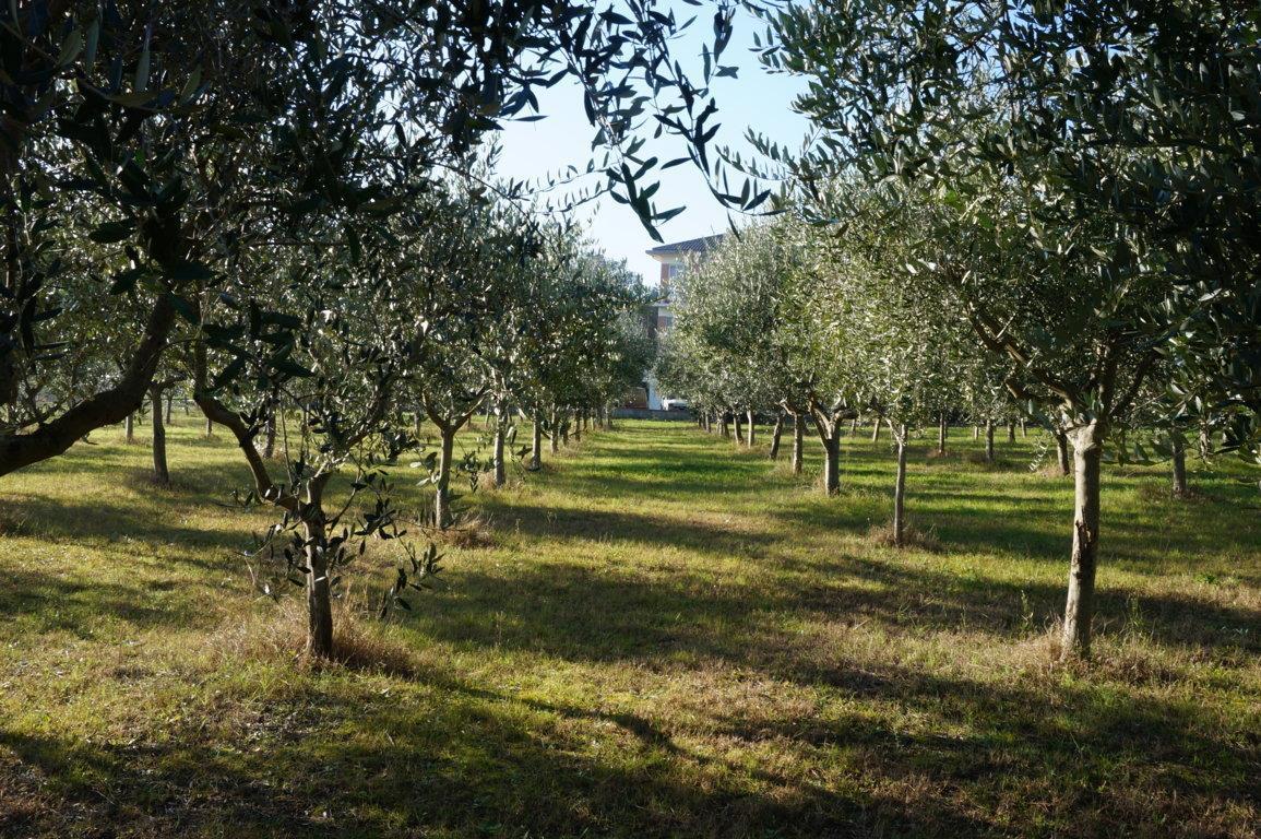 Vendita Terreno Agricolo Pesaro