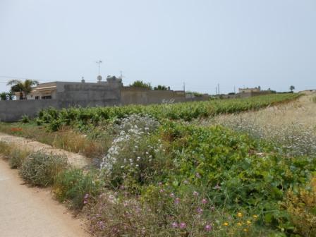 Terreno Agricolo in Vendita Mazara del Vallo