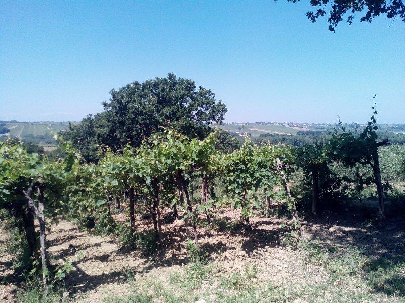 Terreno Agricolo in Vendita Vasto