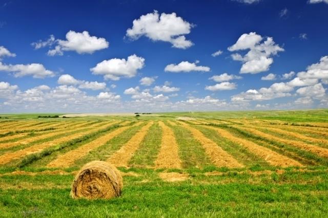 Terreno Agricolo in Vendita Rimini