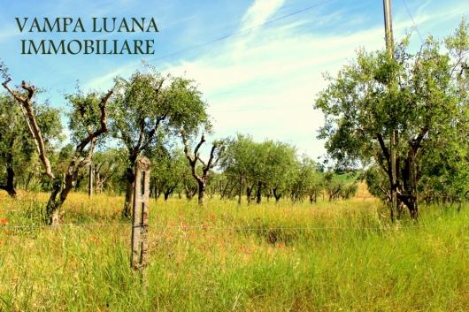 Terreno Agricolo in Vendita Misano Adriatico