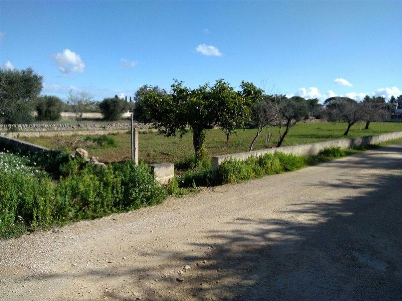Terreno Agricolo in Vendita Nardo'