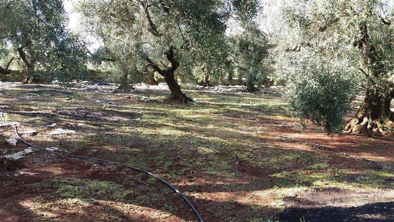 Vendita Terreno Agricolo Ugento