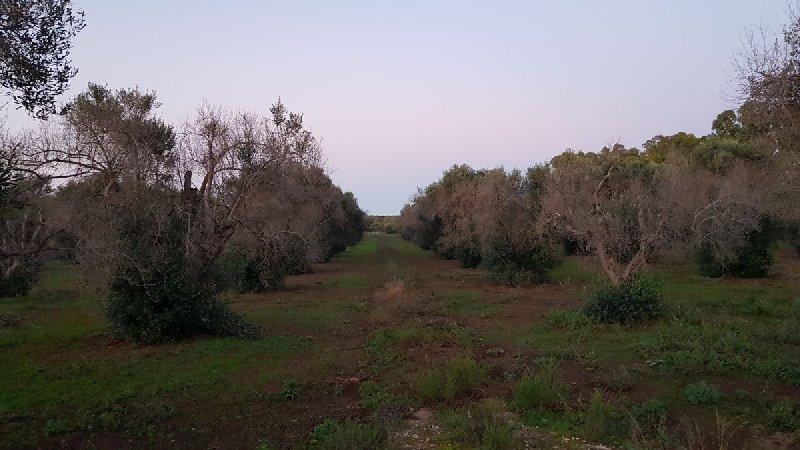 Terreno Agricolo in Vendita Ugento