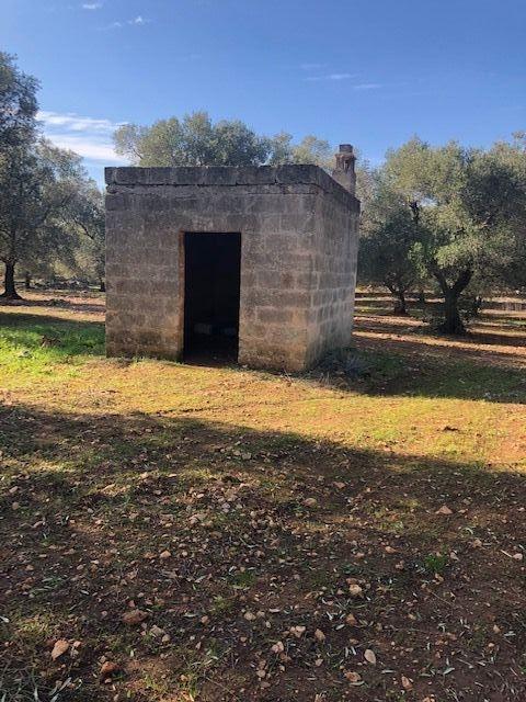 Terreno Agricolo in Vendita Francavilla Fontana