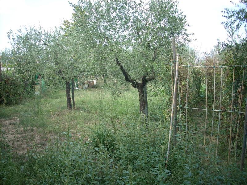 Terreno Agricolo in Vendita QUARRATA