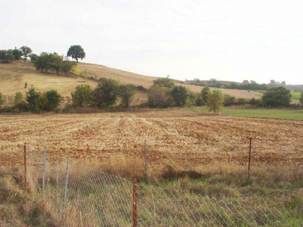 Vendita Azienda Agricola CAMPAGNATICO