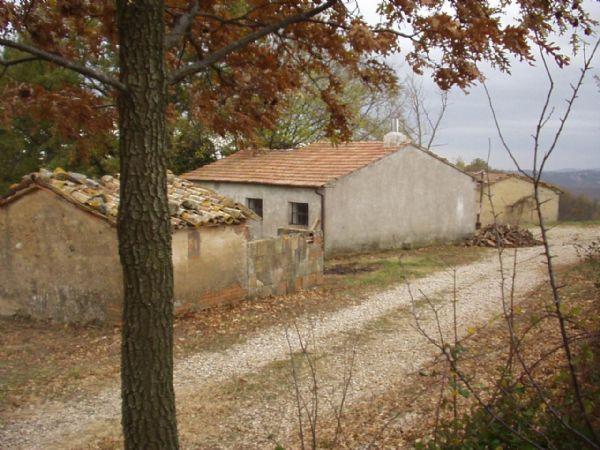 Vendita Azienda Agricola ROCCALBEGNA