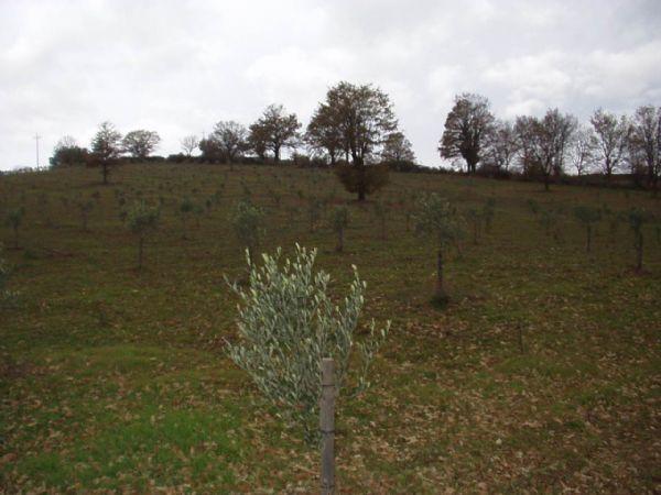 Azienda Agricola in Vendita ROCCALBEGNA