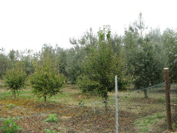 Vendita Azienda Agricola GROSSETO