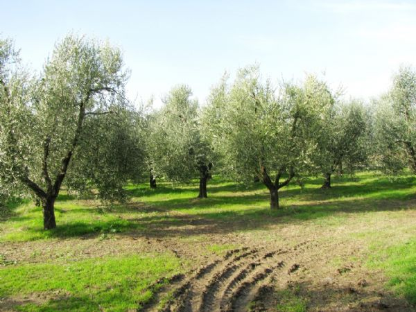 Vendita Azienda Agricola CINIGIANO