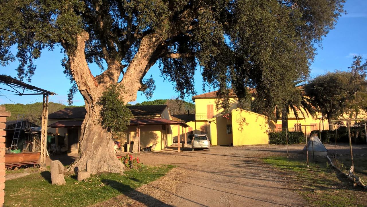 Azienda Agricola CASTAGNETO CARDUCCI C38