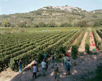 Azienda Agricola CASTAGNETO CARDUCCI C172