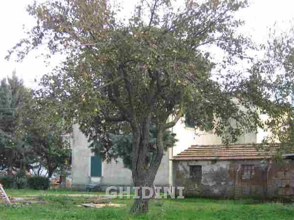 Azienda Agricola SCANSANO 1188.15M