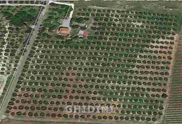 Azienda Agricola MAGLIANO IN TOSCANA 1750.191M