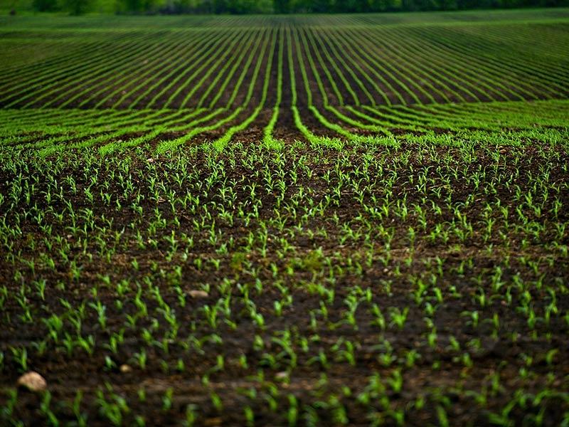 Terreno Industriale in Vendita PANDINO