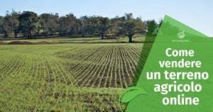 Come vendere un terreno agricolo