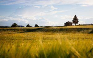 Terreno Agricolo Edificabile