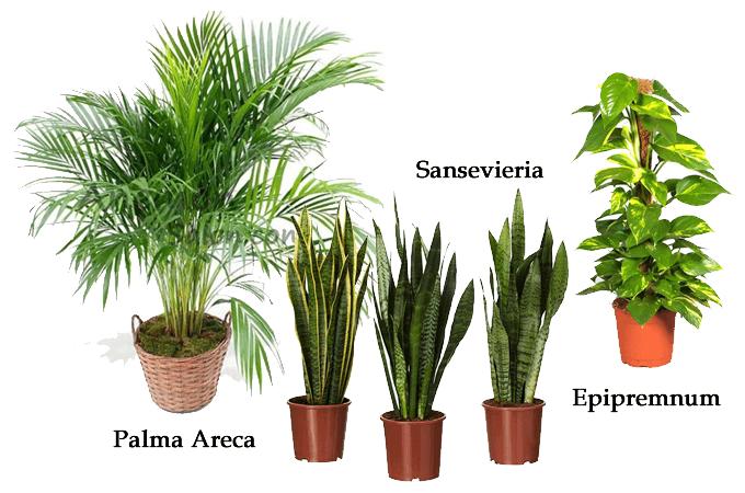 piante qualità dell'aria