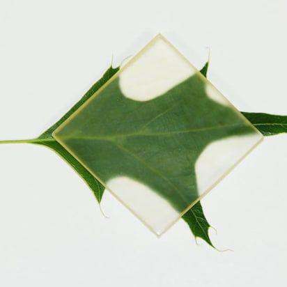 legno trasparente_1
