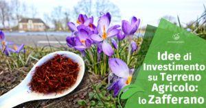 Idee di Investimento su Terreno Agricolo: lo Zafferano