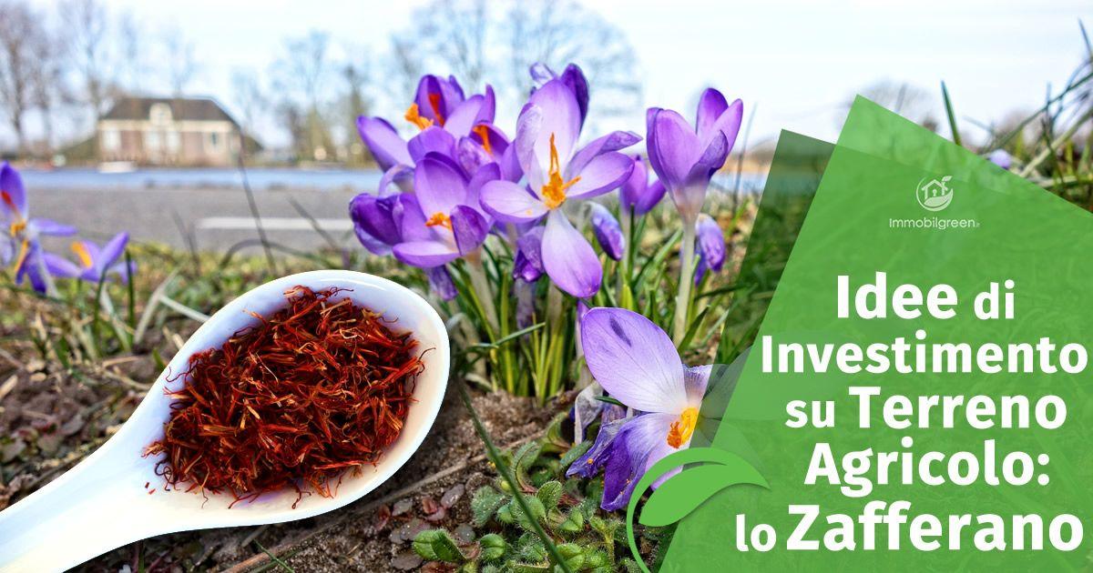 Idee di Investimento su Terreno Agricolo lo Zafferano