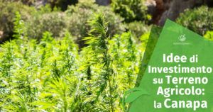Come far fruttare un Terreno Agricolo: coltivare la Canapa