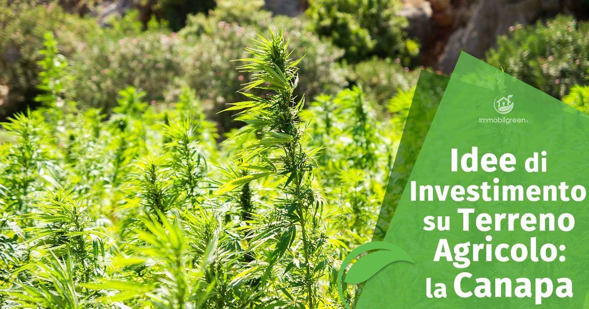 Idee di Investimento su Terreno Agricolo la Canapa
