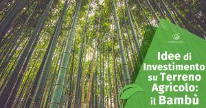 Idee di Investimento su Terreno Agricolo: il Bambù