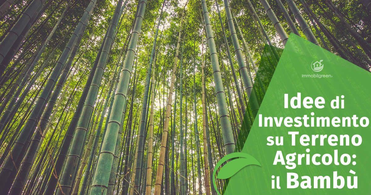 Idee di Investimento su Terreno Agricolo, il Bambù