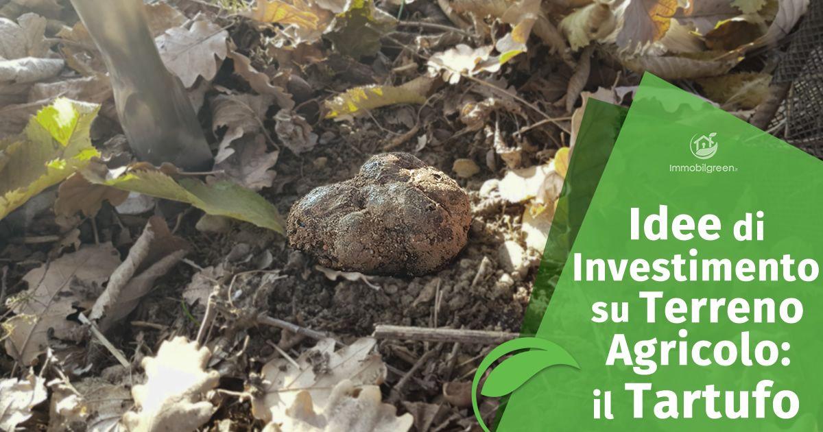 Idee di investimento su terreno agricolo, il Tartufo